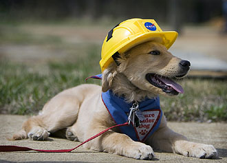 Puppy with hard hat